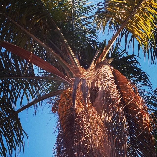 BrewTravels: San Diego, CA (BBC14 Part1)